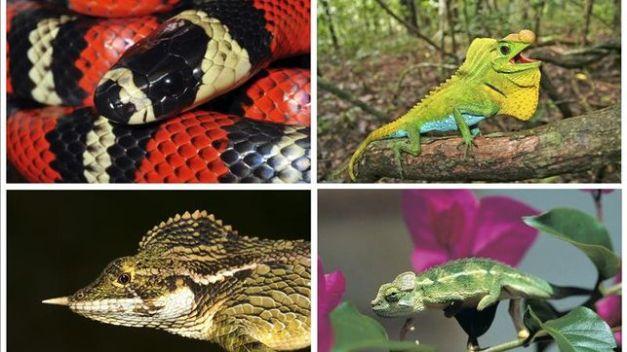 Reptiles en peligro